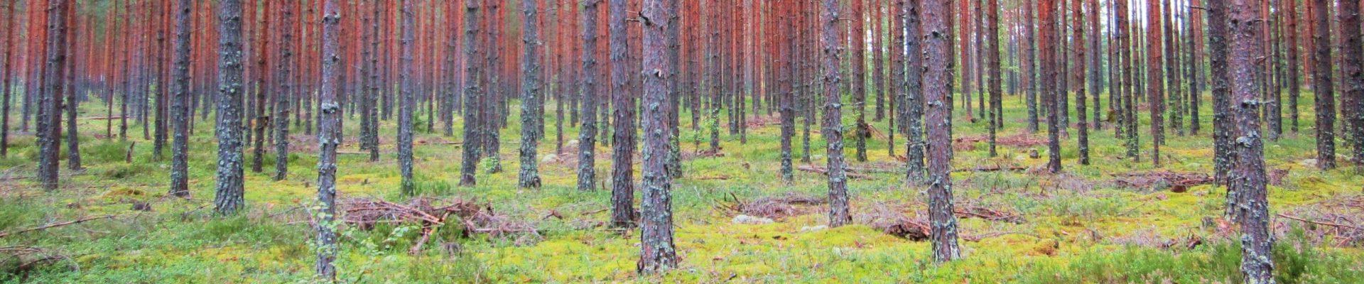 Metsäsuunnittelu